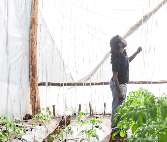 A Farmer In Kenya Working In A Greenhouse