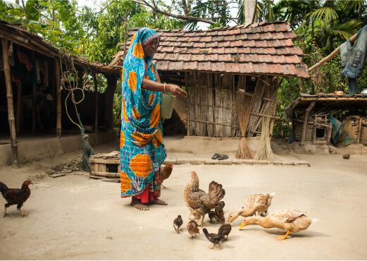 A Woman Feeding Chickens