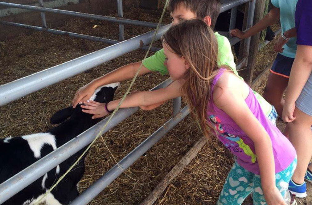 Two Children Petting A Dairy Cow At A Farm