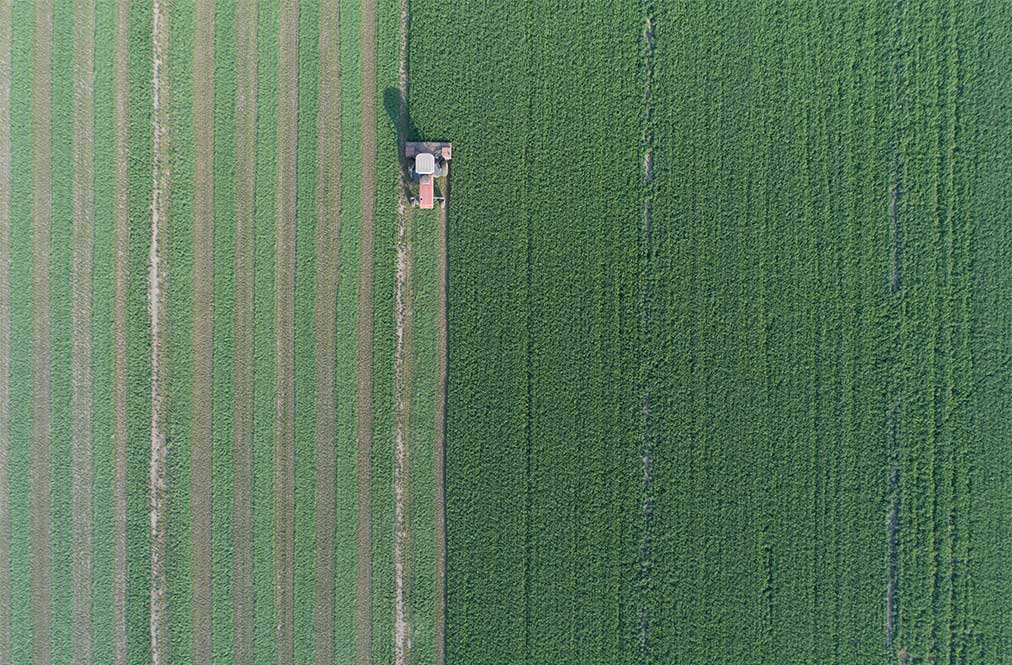 Aerial View Of A Field Being Harvested