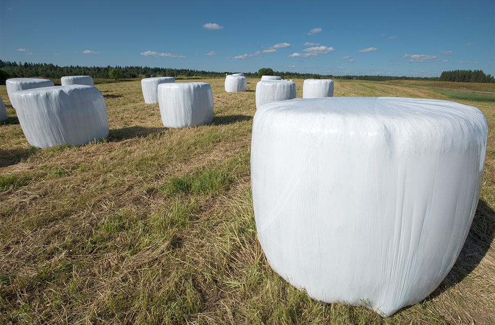 Hay Bales Wrapped In Plastic In A Field