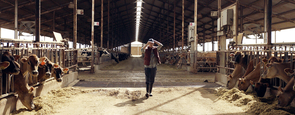 Still Image of Commercial Showing Member In Dairy Barn
