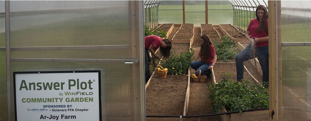 Students Working In A WinField Answer Plot Community Garden