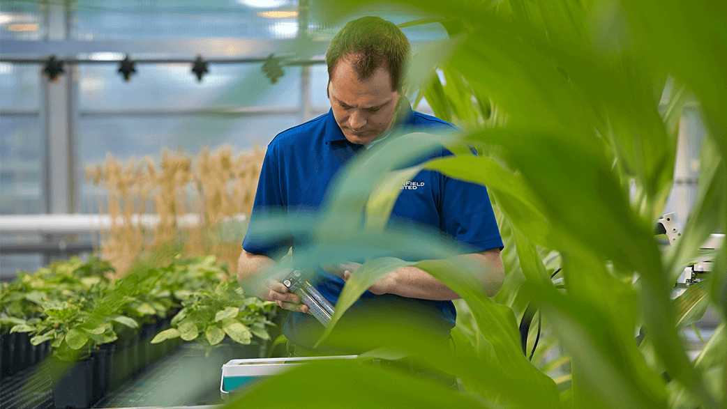 A WinField United Researcher In A Greenhouse