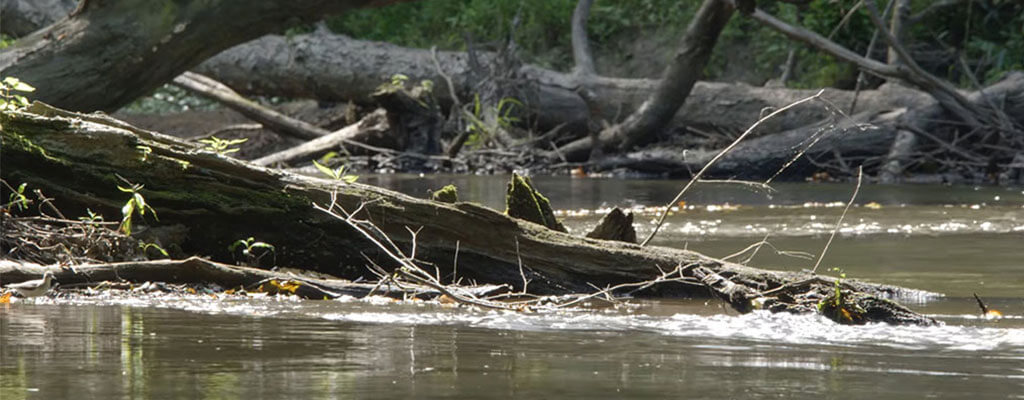 A Creek With A Tree Branch In It In The Sunlight