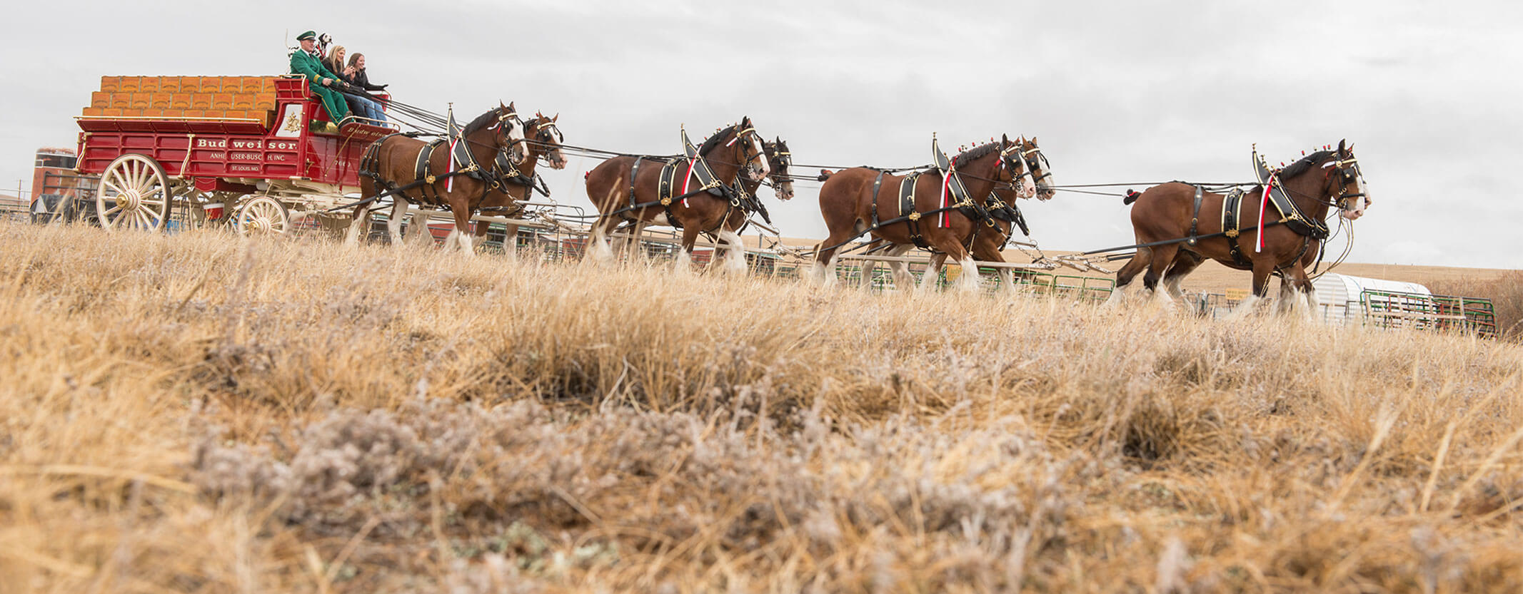 Clydesdale Horses Pulling A Wagon Across A Field